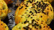 Peynir ve Dereotlu Çörek Tarifi